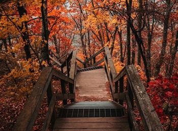 A wooden plank path surrounded by a brilliantly red forest